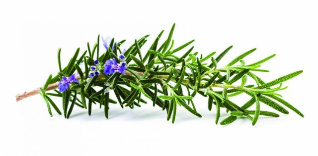 Rosemary Oil Scalp Massage help hair grow faster