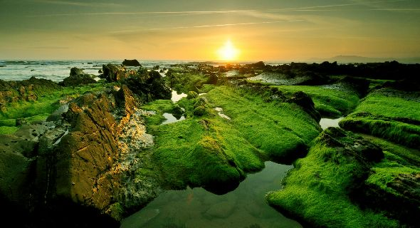 green-rocky-coast-on-sunset-natural-wallpapers-t